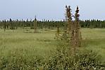 Inuvik à Eagle Plains_17