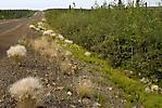 Inuvik à Eagle Plains_35