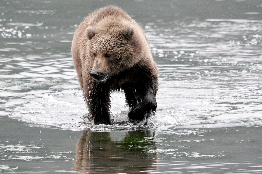 Kodiak Alaska datant